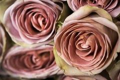 Bündel frische rosa Rosen schließen oben Lizenzfreies Stockbild