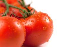 Bündel frische Tomaten mit Wassertropfen, lokalisiert auf weißem Hintergrund Weiche Farben Stockbild