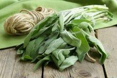Bündel frischer grüner Salbei Lizenzfreies Stockfoto