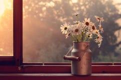 Bündel Gänseblümchen auf hölzernem Fensterbrett Stockfotos