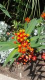 Bündel Gelb des roten Frühlinges der Blumen lizenzfreies stockbild
