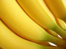 Bündel gelbe Bananen Lizenzfreies Stockfoto