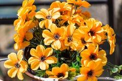 Bündel gelbe Blumen stockfotos