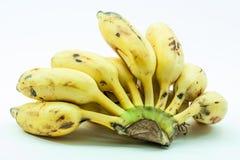 Bündel gelbe kleine Bananenfrucht Lizenzfreie Stockfotografie