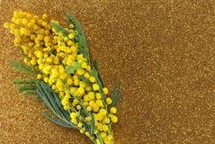 Bündel gelbe Mimosen in der Blüte für die internationalen Frauen Stockbild