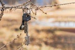Bündel glänzendes Metall verlor Hausschlüssel auf dem Ring, der an einem Baumast hängt stockfotos