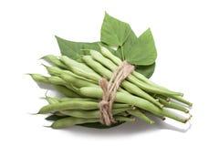 Bündel grüne Bohnen gebunden mit Seil Lizenzfreie Stockbilder