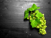 Bündel grüne Trauben Lizenzfreies Stockfoto