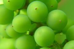 Bündel grüne Trauben Lizenzfreies Stockbild