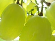 Bündel grüne Trauben Lizenzfreie Stockbilder