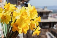 Bündel helle Frühjahrgelb-Narzissenblumen Blumenstrauß der Narzissen Stockbilder