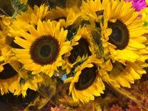 Bündel helle Sonnenblumen verkauft am Markt lizenzfreies stockbild