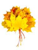 Bündel Herbst farbige Ahornblätter Stockfotos
