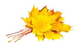 Bündel Herbstahornblätter Lizenzfreie Stockbilder