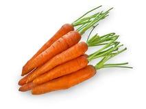 Bündel Karotten Stockbilder