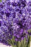 Bündel Lavendel Lizenzfreies Stockbild