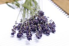 Bündel Lavendel Lizenzfreie Stockbilder
