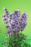 Bündel Lavendel stockfotografie