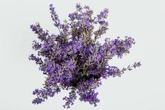 Bündel Lavendel auf einem weißen Hintergrund Lizenzfreie Stockfotos