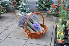 Bündel Lavendel in einem Weidenkorb auf der Weihnachtsstraße angemessen Stockfoto