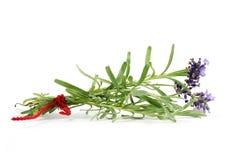 Bündel Lavendel getrennt auf Weiß stockbild