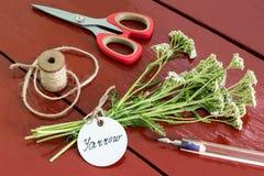 Bündel millefolium achillea der Schafgarbe mit Aufkleber Stockfotos