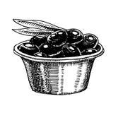 Bündel Olivenöl und Organisches vegetarisches Produkt Grünpflanze für gesunde Diät Schwarze Frucht für das Kochen des Lebensmitte lizenzfreie abbildung