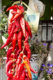 Bündel Pfeffer des roten Paprikas Stockfoto