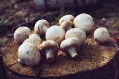 Bündel Pilze liegt auf dem Stumpf Filmfilter Lizenzfreie Stockfotos