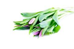Bündel purpurrote Tulpen stockfoto