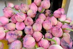 Bündel rosa Lotos Lizenzfreie Stockbilder