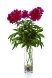 Bündel rosafarbene Blumen auf Weiß, Pfingstrosen Lizenzfreie Stockfotografie