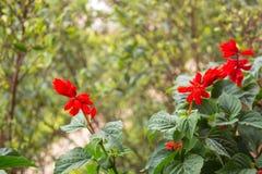 Bündel rote Blumen lizenzfreies stockbild