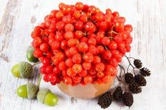 Bündel rote Herbsteberesche, Erlenkegel und Eicheln auf rustikalem hölzernem Hintergrund Lizenzfreie Stockfotos