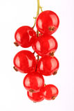 Bündel rote Johannisbeeren Stockfotografie