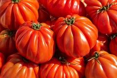 Bündel rotes Tomate R.A.F. Stockbild