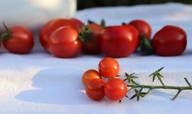 Bündel saftige reife frische rote Tomaten auf einem weißen Baumwollstoff im Biogarten, mit unscharfem Hintergrund Gesundes rohes  Stockbild
