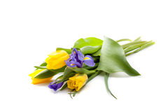 Bündel schöne gelbe Tulpen und Blenden Stockfoto