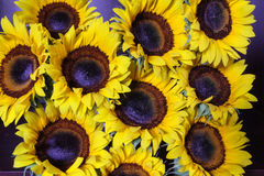 Bündel Sonnenblumen Stockbild