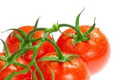 Bündel Tomaten Lizenzfreies Stockfoto