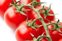 Bündel Tomaten auf der Rebe stockbild