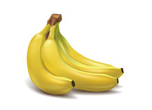 Bündel tropische Bananen Lizenzfreie Stockbilder