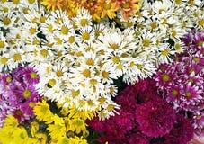 Bündel verschiedene Blumen Stockfotografie