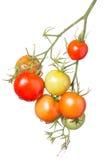 Bündel verschiedene farbige Tomaten Lizenzfreie Stockfotos
