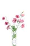 Bündel von rosa Eustoma blüht im Glasvase Stockfotos