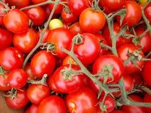 Bündel von Rosy Red Vine Tomatoes Lizenzfreies Stockbild