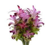 Bündel von Siam Tulip Lizenzfreie Stockfotografie