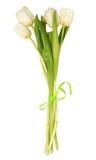 Bündel weiße Tulpen Stockfoto
