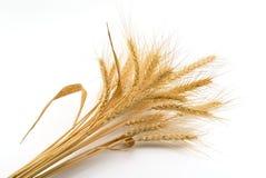 Bündel Weizen Lizenzfreie Stockbilder