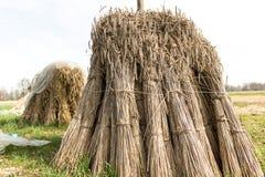 Bündel Weizen Stockfotos